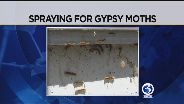 Gypsy moths are getting out of control in the southeastern part of the state and one town is looking to stop them before they decimate any more trees. (WFSB)