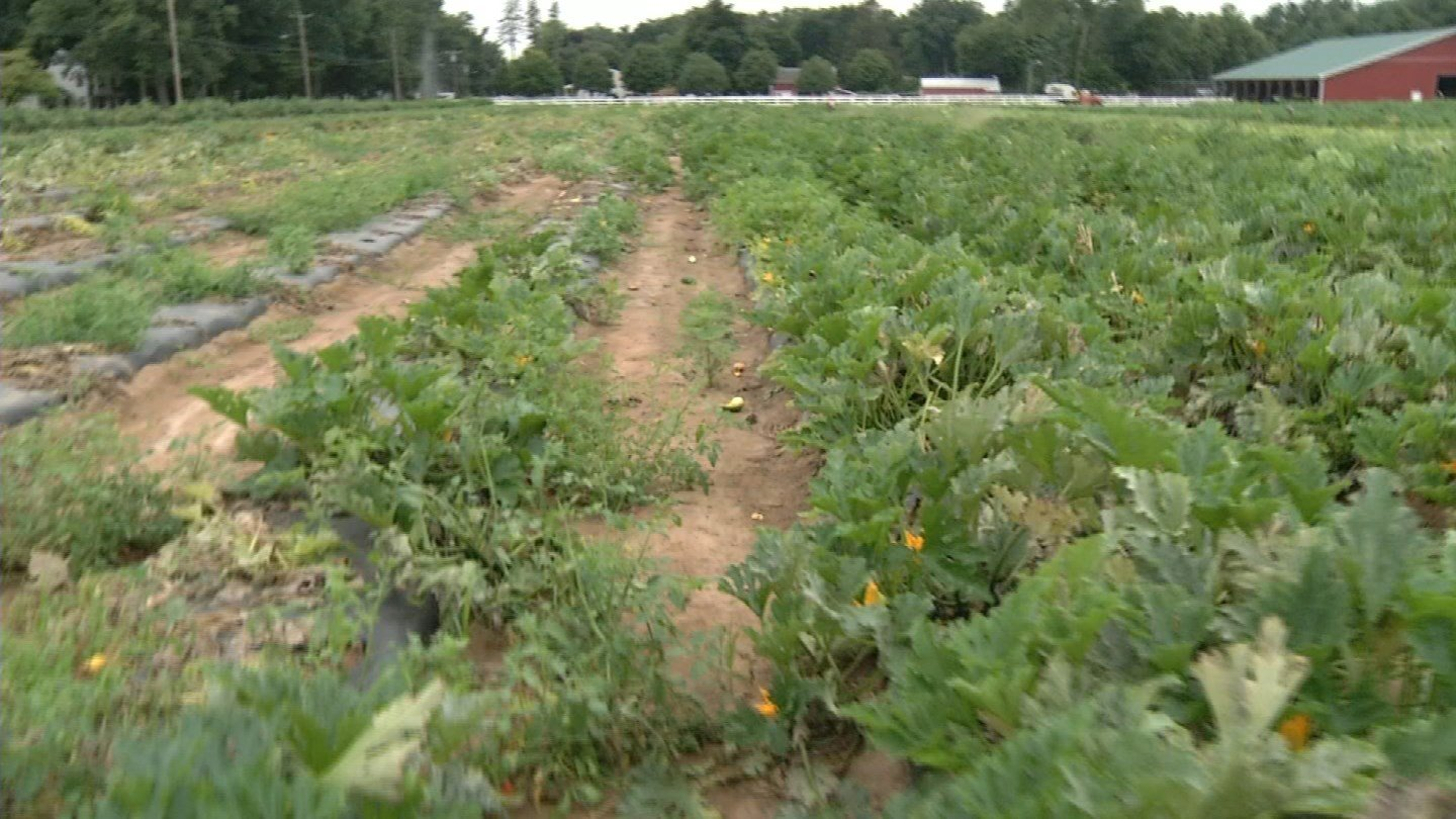 Drought conditions are affecting farms in northeastern Connecticut. (WFSB photo)