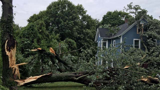 This tree struck a house and cars on Middletown Avenue in North Haven. (North Haven Fire Dept.)