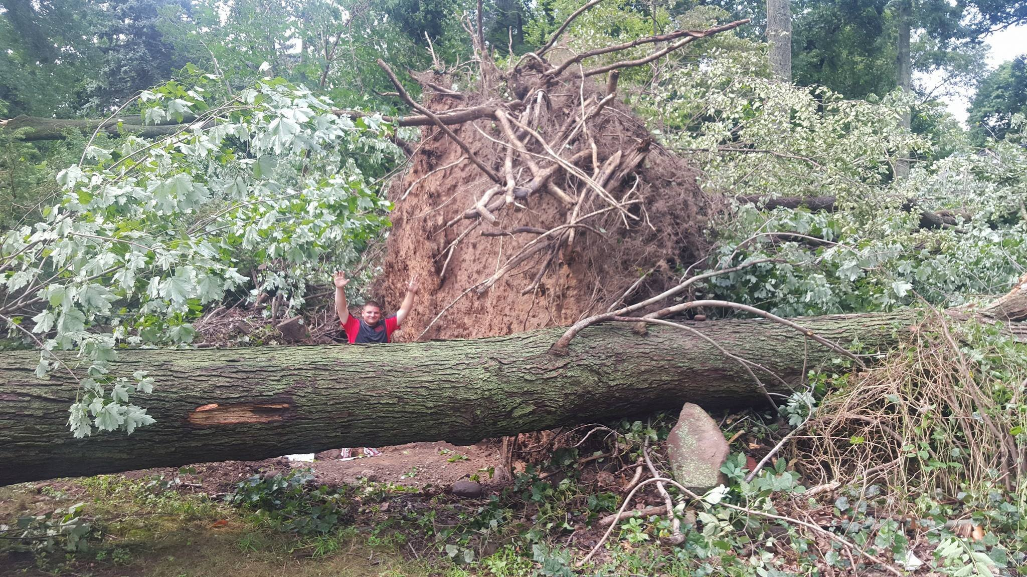 Trees were uprooted across parts of North Haven on Wednesday. (JA2 Aerial Productions)