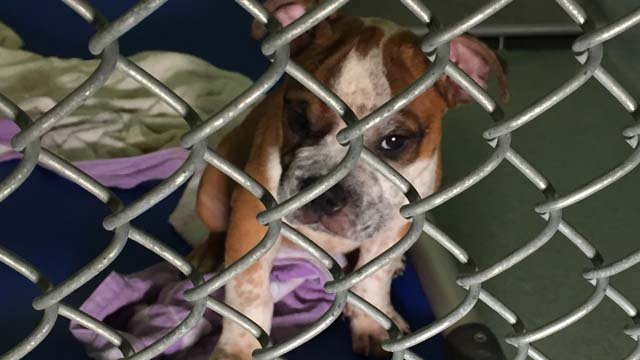 Several puppies in Bridgeport were rescued from a hot car. (WFSB)
