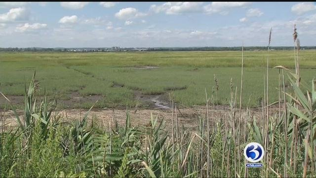 Mosquitoes are biting during the day along the Connecticut shoreline (WFSB)