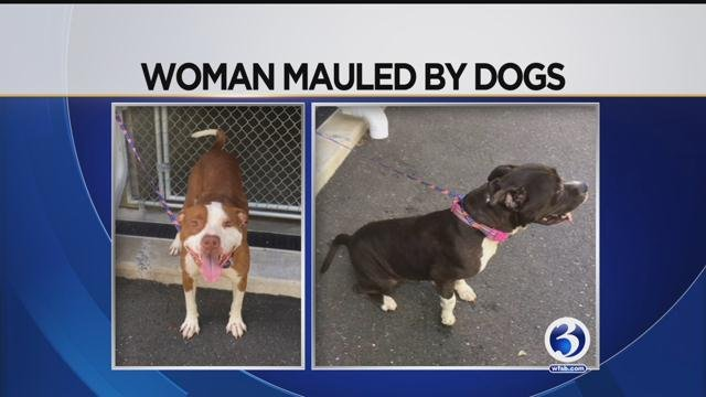 A woman was mauled by dogs in Hartford. (WFSB)