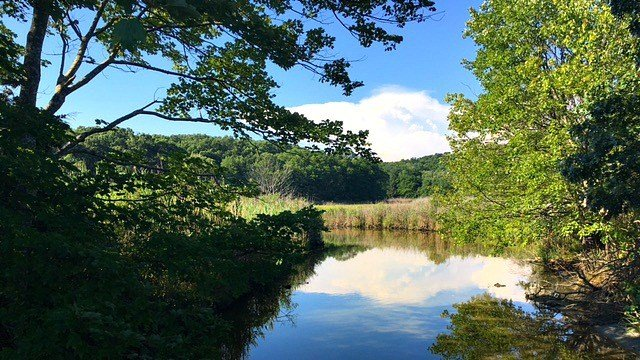Marsh views from shoreline trails