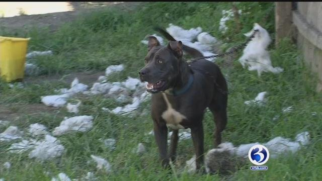 A teenager was reportedly caught on camera beating Grizzly the dog. (WFSB)