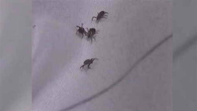 Tick numbers are on the rise across New England this spring. (WFSB file)