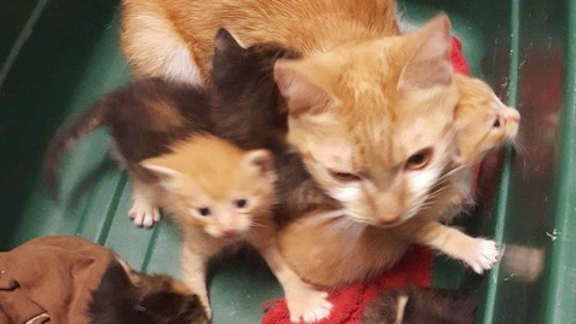 These cats are looking for a new home after they were abandoned. (Wolcott dog pound)