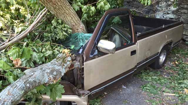 A tree fell onto two cars over the weekend in Norwich (WFSB)