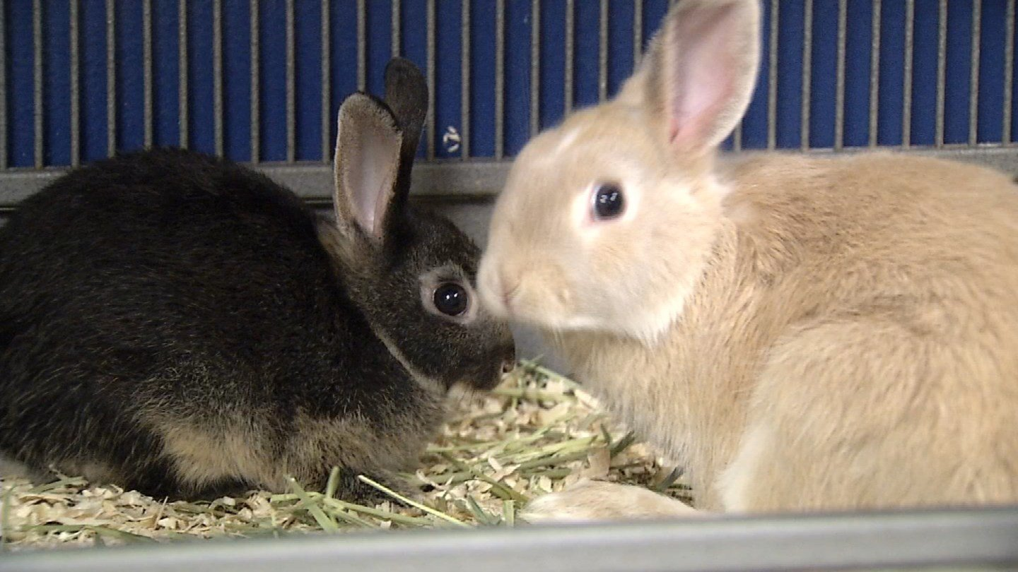 More college students are requesting to live with emotional support animals (WFSB)