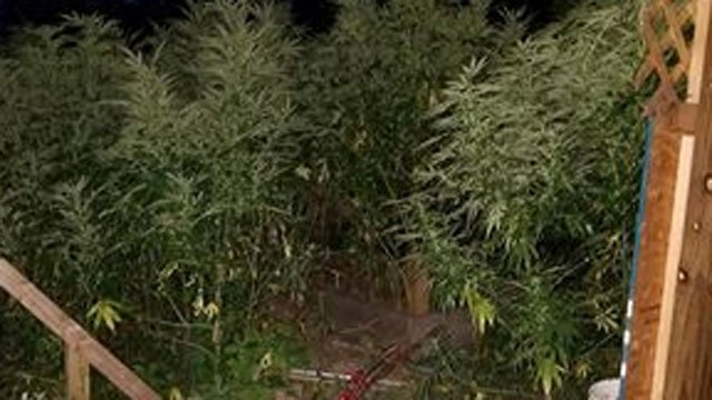 Police said 600 marijuana plants were located daycare in West Haven on Friday.   (West Haven Police Department Facebook)