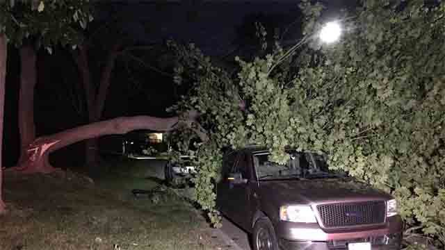 Gusty winds brought down this tree onto a truck in New London (WFSB)