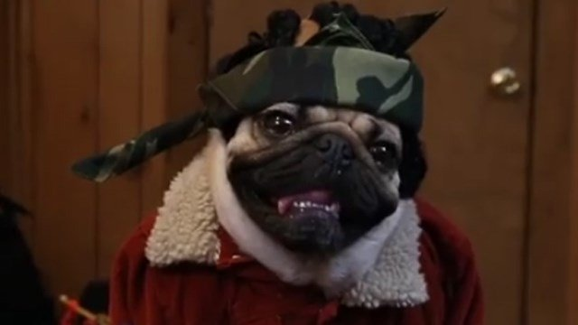 Doug the Pug in 'Stranger Pugs.' (Facebook photo)