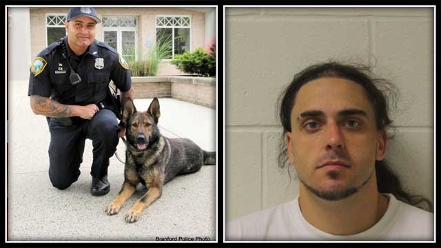 Police K9 Joker and his handler were able to track down a burglary suspect on Thursday (Branford Police photo)