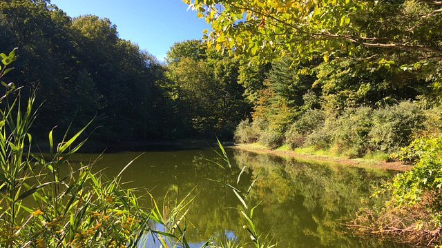 Pond provides quiet haven for birds and reptiles
