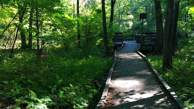 Boardwalk leads to wetlands