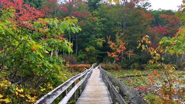 Boardwalk leading into Beaver Marsh