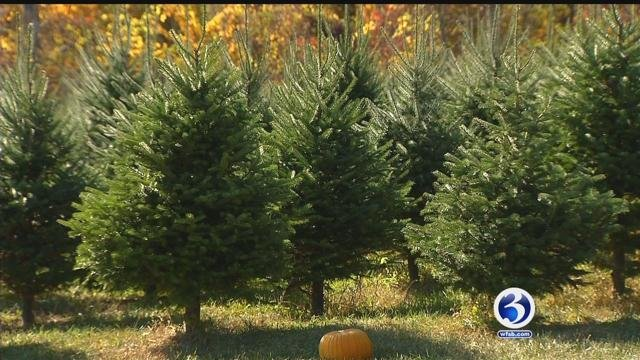 Christmas tree farms are worried about the drought (WFSB)