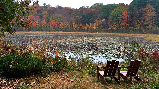 Quiet spot to view Taylor Pond