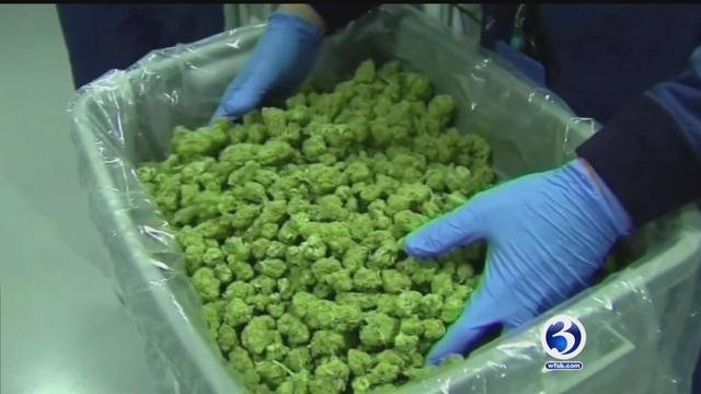 Voters in five states including neighboring Massachusetts will decide on Tuesday whether recreational use of marijuana should be legalized on Election Day. (WFSB file phot)