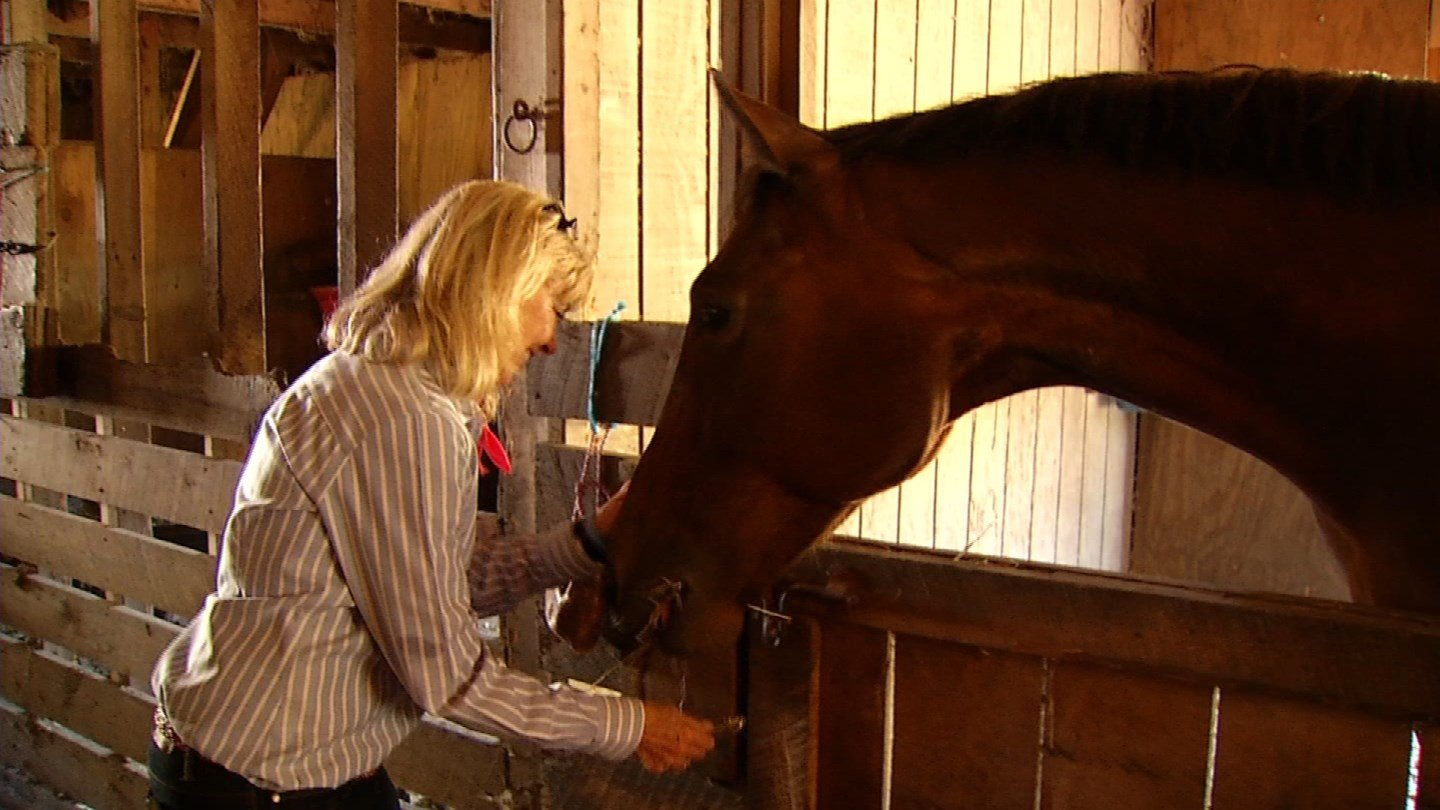 Rep. Diana Urban said she outbid a kill buyer to get her horse, Ella. (WFSB photo)