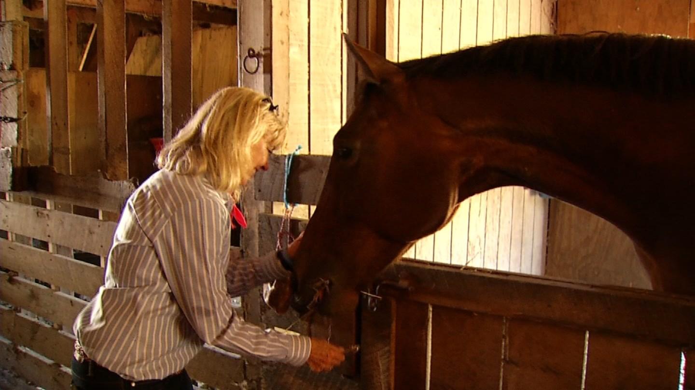 Rep. Diana Urban said she outbid a kill buyer to get her horse, Ella. (WFSB photo)