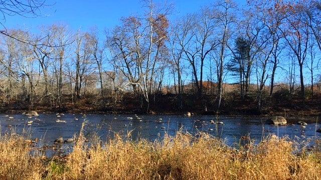 The Shetucket River draws wildlife and fishermen alike