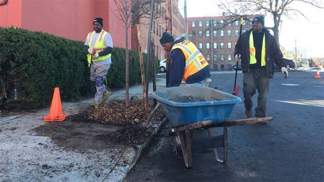 Non-profit organizations are helping replant trees in New Haven (WFSB)