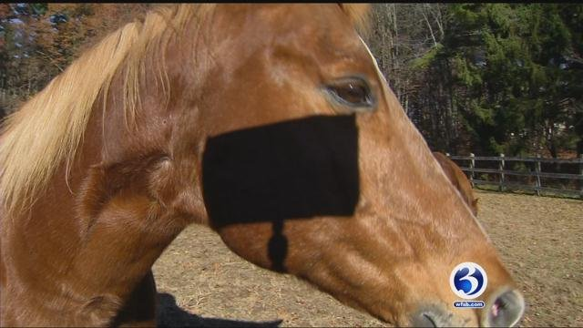 Hartford police Department announced on Friday they will sell their police horses due to budget issues. (WFSB)