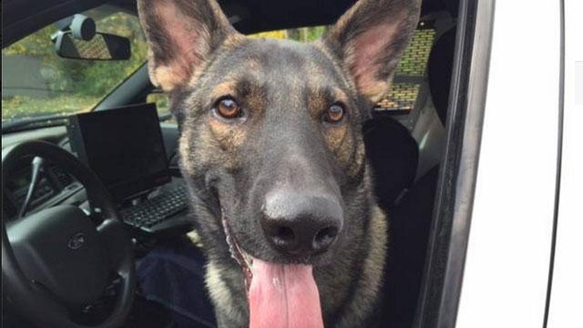 Wethersfield police Officer K9 Thor died this week. (Wethersfield Police Department)