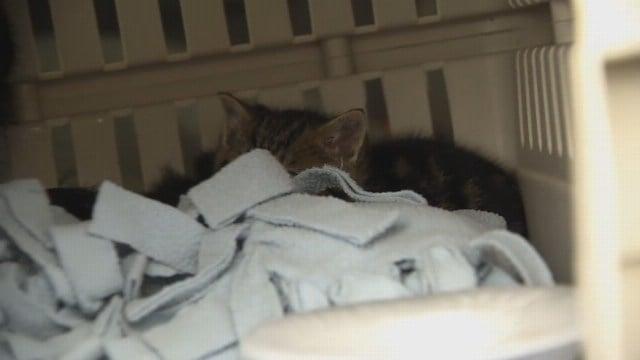 Kittens rescued from storm drain on Quinnipiac University in Hamden. (WFSB)