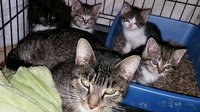 The kittens were reunited with their mom on Wednesday (QU)
