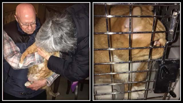 Mickey was found by fire crews on Tuesday (WFSB)