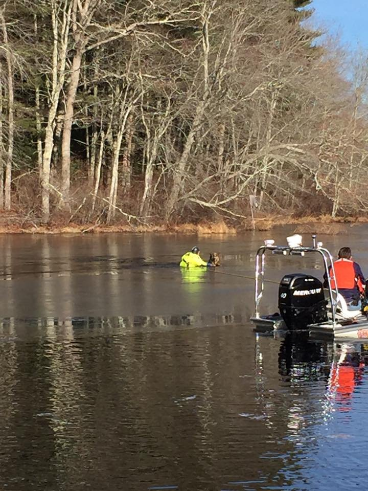 A rescuer makes his way across the thin ice to pull the dog out of the water.  (Voluntown Fire Department Facebook page)