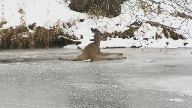 Eyewitness News caught up with the woman who saved this helpless animal in Simsbury on Monday. (WFSB)