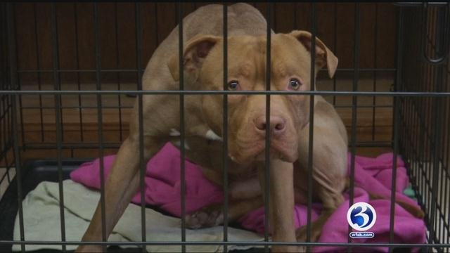 PETA  is offering a $5,000 reward for anybody who comes forward with information that leads to a criminal conviction in the case of a pit bull found abandoned inside a wire crate in East Haven. (WFSB file)
