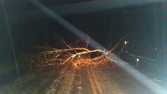 A tree fell over Jones Hollow Road in Marlborough. (Stanislaw/iWitness photo)