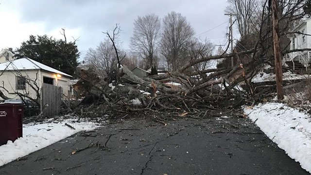 There were downed trees on Johnson Street. (Naugatuck Police Department)