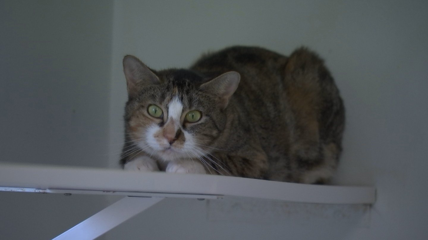 Treasure the cat is in need of a new home (WFSB)