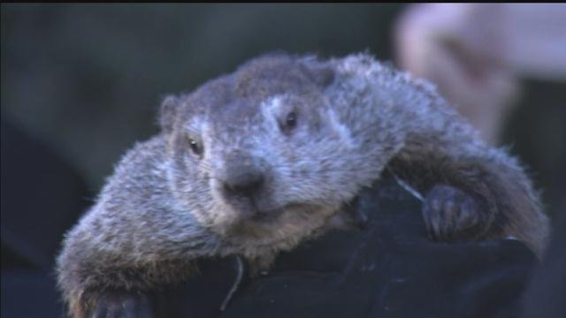 Punxsutawney Phil saw his shadow on Thursday. (CBS photo)