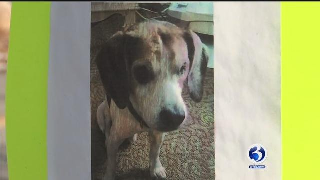 A family from Ledyard needs your help locating their missing 13-year-old beagle named Charlie. (WFSB)