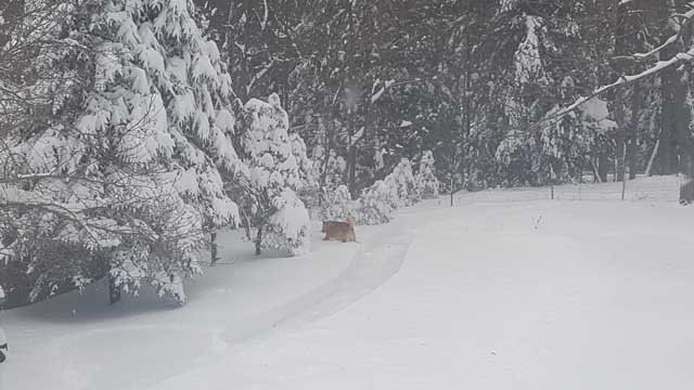 Sharon & Magnum were enjoying the snow in New Hartford on Thursday (iwitness)