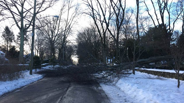 A tree brought down some wires on Old North Stamford Road in Stamford. (Belltown Fire Dept. photo)