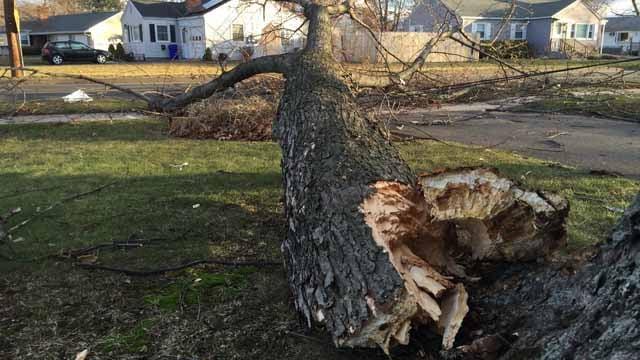 The wind took down a tree on Halfway House Road in Windsor Locks. (WFSB photo)