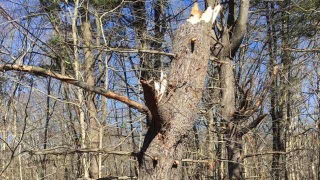 This tree was damaged by winds and a large piece fell on a van and Route 15. (Orange Volunteer Fire Department Facebook)