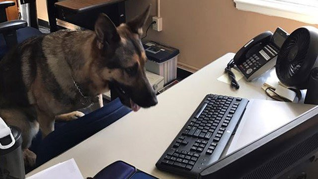 Dexter is a new investigator for state police's Western District Major Crimes unit. (State police photo)