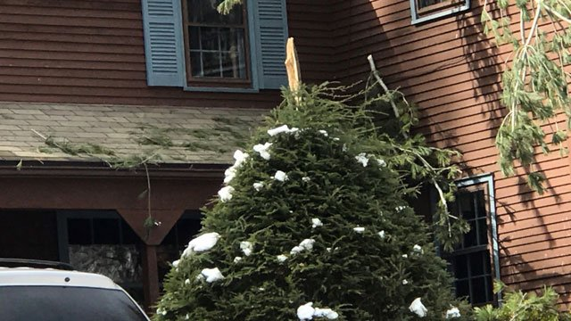 Winds could be what caused this tree branch to snap on Saturday. (WFSB)