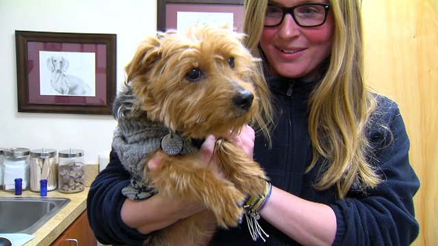 Keeping your four-legged friends warm in the cold temperatures is just as important! (WFSB)