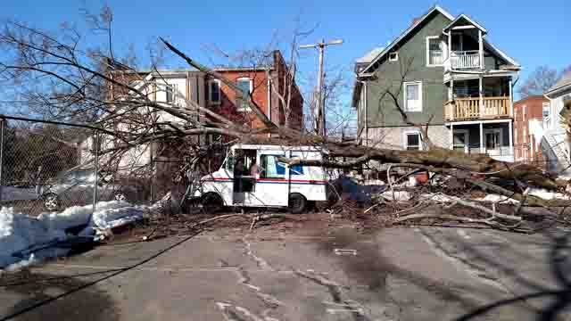 A tree came down at the Bristol Post Office on Wednesday. (Todd/iWitness photo)