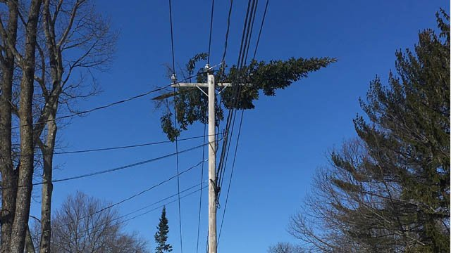 A tree became caught on power lines on Country Road in Wolcott. (WFSB photo)