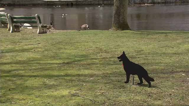 Milford officials hope a few decoys will do the trick in scaring off the geese. (WFSB)